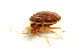 Pest Control with Thermal Heating Solutions